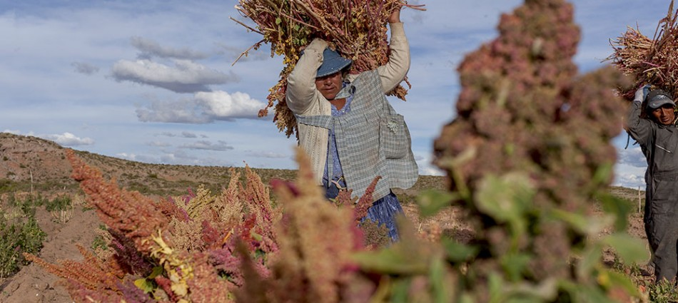 Food Security: the Boom of Quinoa, Bolivia
