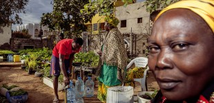 Food Security: Urban Garden in Dakar, Senegal
