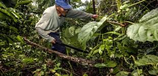 Food Security: Amazonia sin fuego