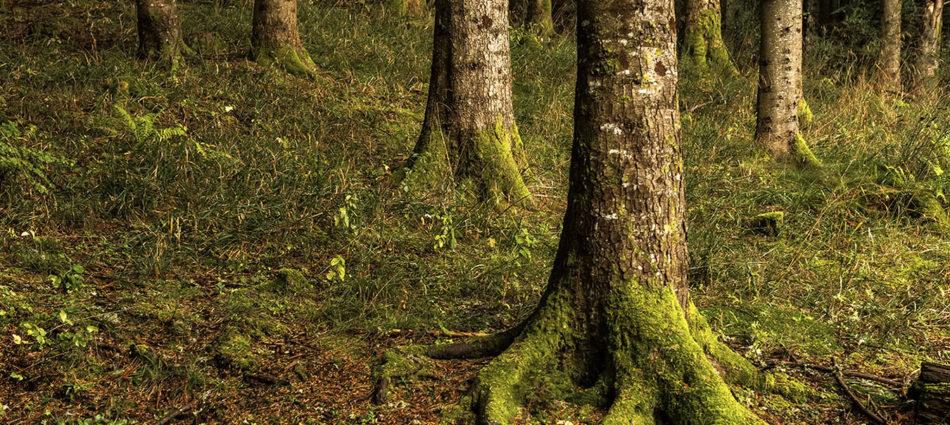 Vivre la Forêt ! ONF